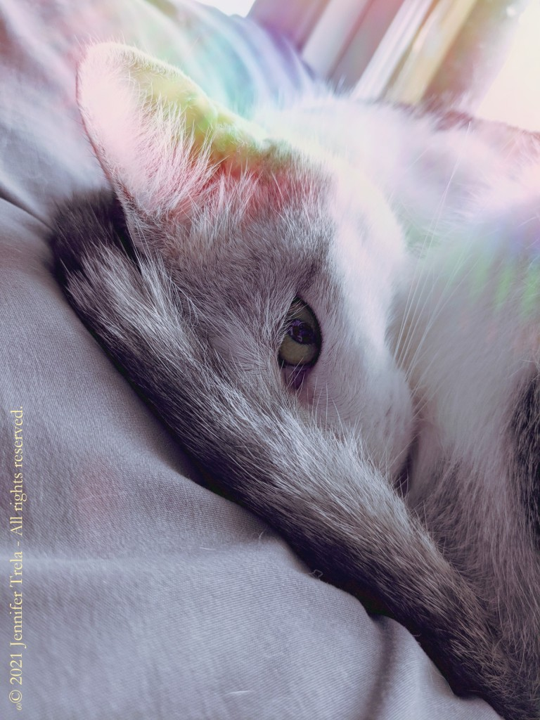 A primarily white cat with grey and black tabby stripes has his tail curled around his head as he rests. His eye is opened, as he was just disturbed by his evil human mom. A rainbow glare shines in from the window behind him.